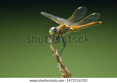 macro photograph of a dragonfly