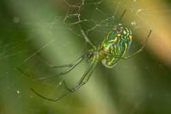 Macro photograph of a small green spider with orange spots, hanging in its web, with a green blurred plant background.
