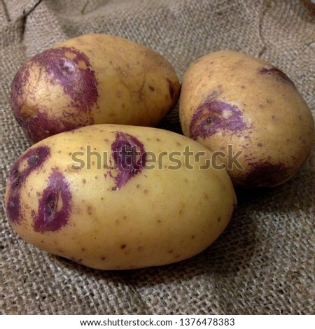 Macro Photograph of a vegetable potato. Fruits vegetables potatoes lie in rows. Tubers of potatoes with pink spots. The product is a white potato variety vegetable.