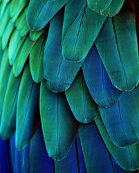 Macro photograph of the blue and green feathers of a macaw.