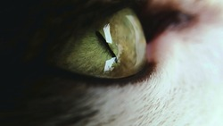 Macro photography about a cat's green eye