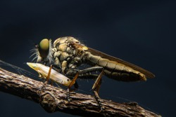 Macro photography insects perching leaves in nature