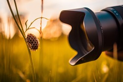 Macro photography lens close to meadow flower grass with empty bee nest on the grass in a park. Hobby, nature outdoor, recreational freedom activity. Idyllic nature sunset, camera lens macro