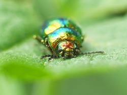 Macro photography of a beetle