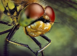 macro photography of a fly