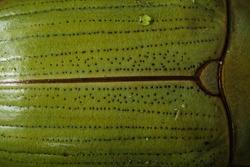 Macro photography of a green beetle