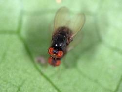 Macro Photography of Black Blowfly on Green Leaf