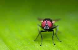 Macro Photography of Black Blowfly on Green Leaf with Copy Space
