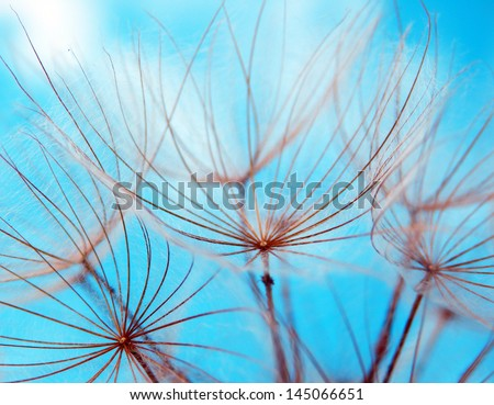 macro photography of dandelion seeds and blue sky