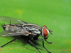 Macro Photography of Housefly on Green Leaf