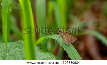 macro photography of insects #1377830684
