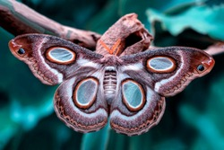 Macro Photography of  Moth on Twig of Plant.