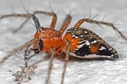 Macro Photography of Spider on White Floor