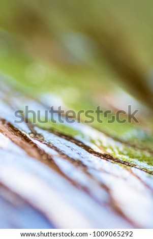 Macro photography of the abstract