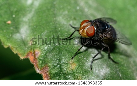Macro photos of common insects around