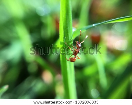 Macro pic of an ant
