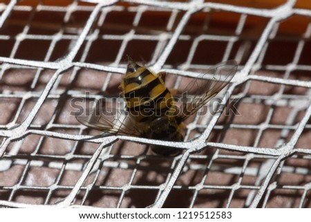 Macro picture detail of a bee sting