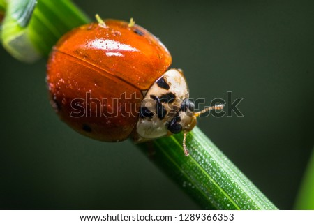 Macro picture of a ladybug