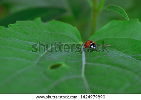 Macro picture of a ladybug on a leaf