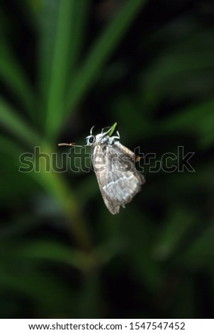 Macro picture of the moth sitting on the plant