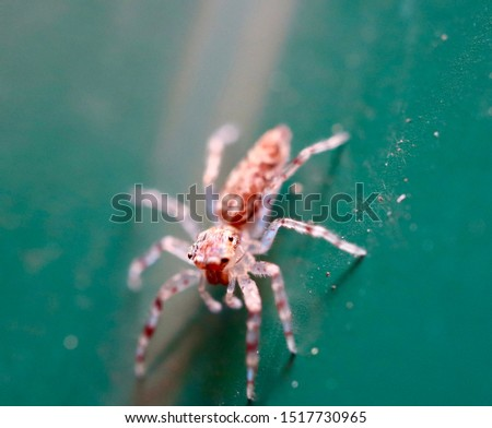 Macro pictures of a insect in a Sydney Suburban backyard