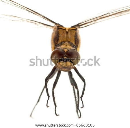 Macro portrait of a dragonfly against a white background