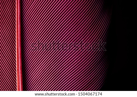 Macro red feather,Macaw Feathers (Maroon) ,Feather, Bird, Animal, Maroon, Red