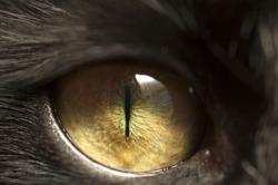 Macro shoot of black cat eye with reflection of window