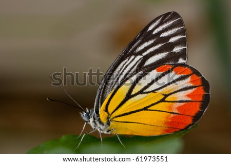 Macro shot colourful Butterfly, Chonburi Thailand