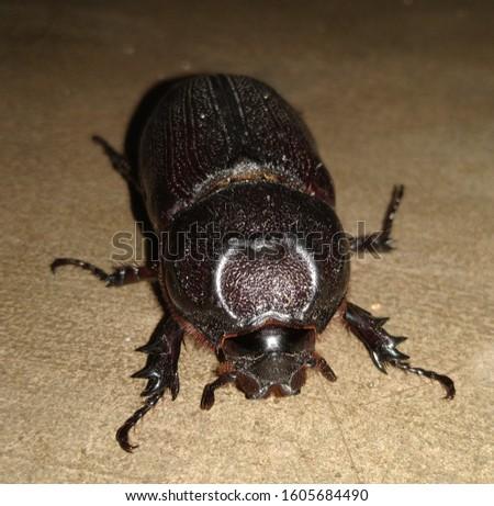 Macro shot of  a Beetle