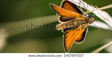 Macro shot of a butterfly