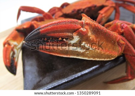 """Macro shot of a crab claw (""""Necora puber"""" or velvet swimmer) on a tray before chopping them to serve on the dish Stockfoto ©"""