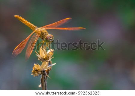 macro shot of a dragonfly in...