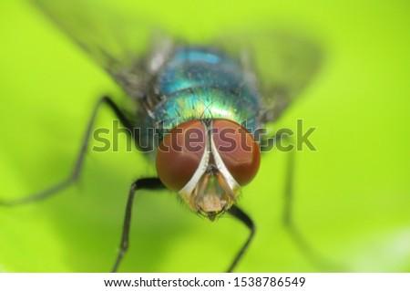 macro shot of a fly's face