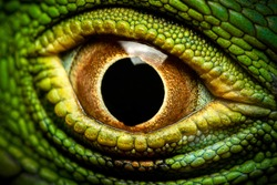 Macro shot of a green iguana's eye