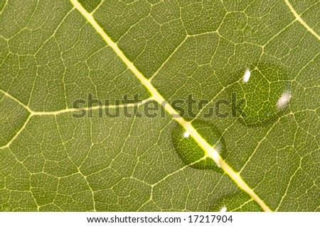 Macro shot of a green leaf with tiny drops of water #17217904