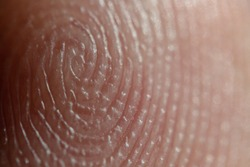 Macro shot of a man's finger. The grooves forming the pattern. A unique skin pattern on the finger from which the fingerprint is made. Super Macro with high magnification.