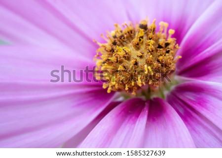 Macro shot of a purple flower