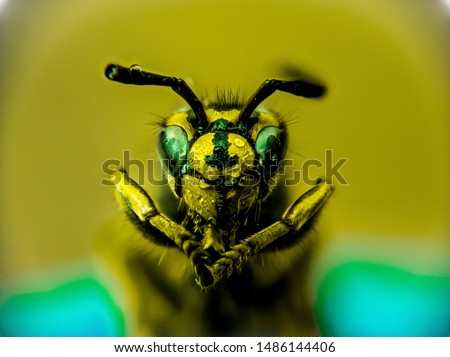 Macro shot of a wasp, focus stacked from several images #1486144406