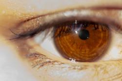 Macro shot of beautiful natural brown eye. Detailed photo of female model with makeup