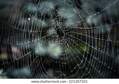 Macro shot of big spider web covered with drops #221287501