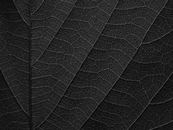 macro shot of black leaves texture