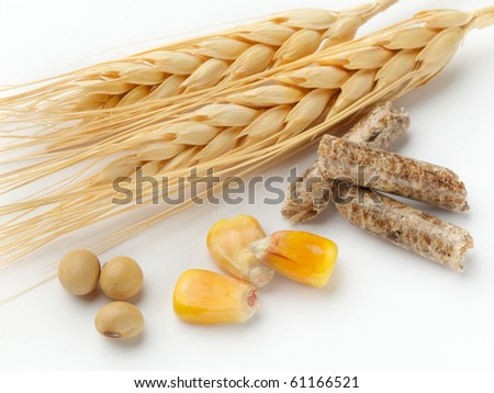 macro shot of corn, wheat, soy beans and wood pellets shot on white background with soft shadow