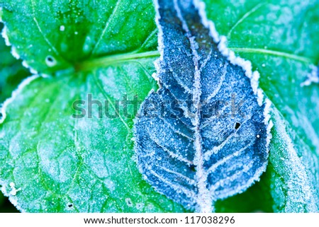macro shot of frozen leaf with icy crystals - shallow depth of field