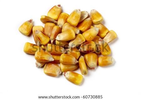 macro shot of golden yellow corn kernels used for ethanol shot on white background with soft shadows - stock photo