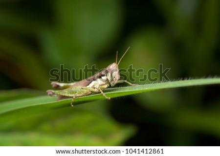 Macro shot of grasshopper in nature at night.  #1041412861