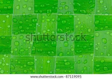 Macro shot of green leaves with dewdrops