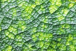 Macro shot of green plant leaf veins structure anatomy, texture microscopic view nature - environment nature sustainable development conservation theme