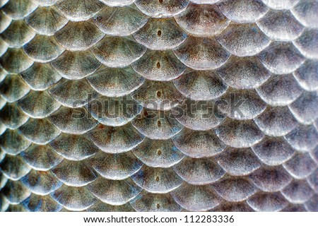Macro shot of roach fish skin, natural texture. Closeup background. - stock photo