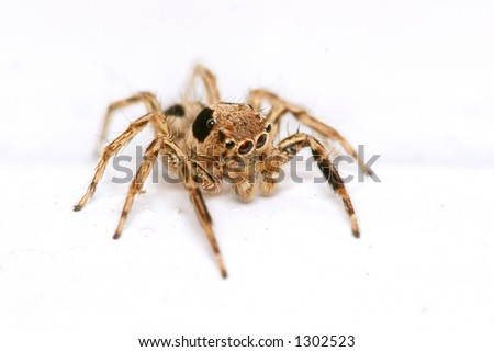Macro shot of small spider